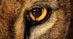 plakat serialu cbs zoo na podstawie powieści Jamesa Pattersona recenzja